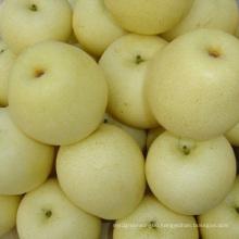 New Crop SGS Ya Pear (28/32/36/40/44)