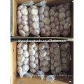 Normal white garlic 10kg per carton 2017 China Jinxiang fresh garlic
