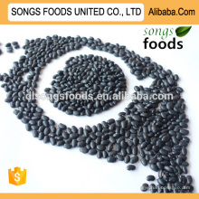 Black Kidney Beans Suppliers