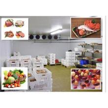 Pilzzimmer, kommerzieller Kühlraum für Restaurant