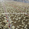 Complete Set Automatic Poultry Equipment for Broiler Farm