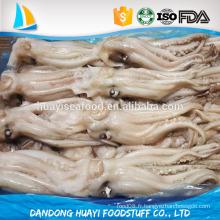 Frozen Illex Argentinus Squid Head taille différente disponible