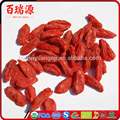 Berry goji health benefits of goji berries pianta goji