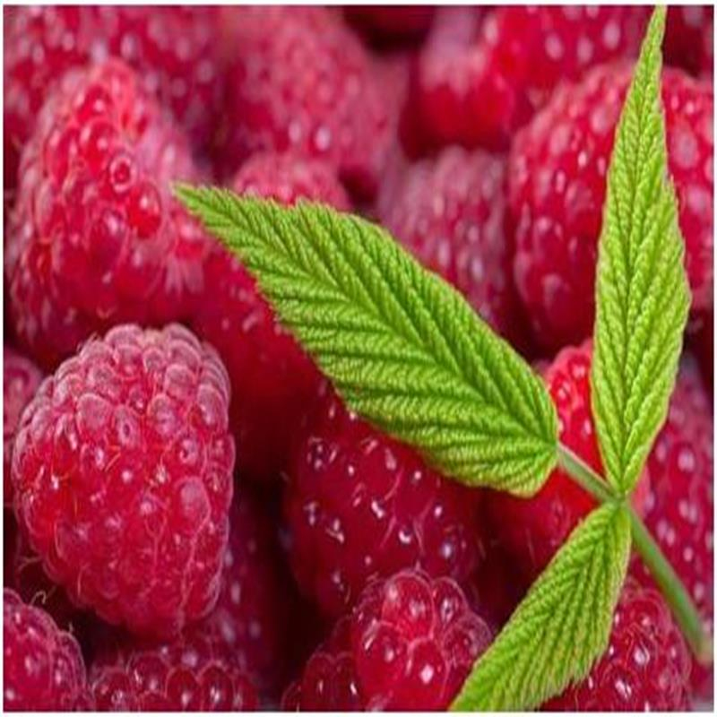New Harvest Best Selling Freeze Dry Raspberry