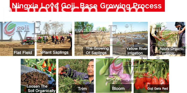 GOJI BERRY ORGANIC growing process