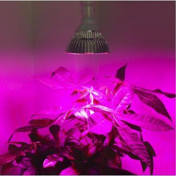 El espectro completo 30W 50W 80W LED crece las luces E27 El jardín de la horticultura que florece las lámparas de la planta de las verduras del Hydroponics