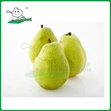 Nova safra ya pear / pear / fresh ya pear