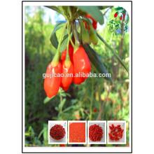 crop Himalayan Certified Organic Goji berry, Tibet goji berry