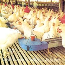 Équipement de ferme de poulet d'Automtic pour la maison de Breeder