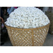 Fresh Natural Silkworm Cocoons Beauty & Healthy Skin Care