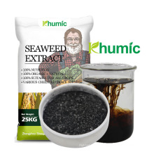 Hot Sale hydroponic nutrients organic fertilizer Natural Kelp Source High Quality seaweed extract powder