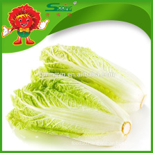 IQF pickled big baby cabbage