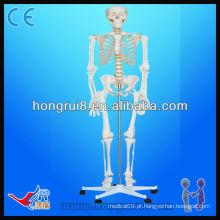Esqueleto de anatomia médica (85CM) mini esqueletos humanos