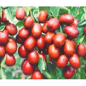 Сушеная органическая дата, китайский день, фрукты, сушеная китайская дата