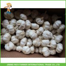 Chinese Fresh Pure White Garlic High Quality 5.5CM Mesh Bag In Carton