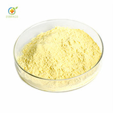 Wholesale Natural Quercetin Powder by HPLC