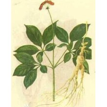 (Ginseng Extract) Inhibit Aging Ginseng Extract