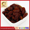 Export Standard Golden and Green Raisins in Hot Selling