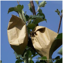 U. S., Canada Market Popular Different Sizes Cheap Breathability Anti-UV Eco-Friendly Pulp Paper Plant Nursery Bag for Fruit Protection