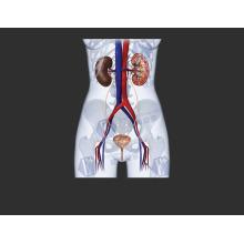 (Lactate de Ciprofloxacine) -Le Lactate de Ciprofloxacine Antibactérien de Haute Qualité