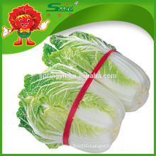 Healthy chinese long leafy cabbage