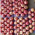 Qualidade superior de maçã Qinguan vermelho fresco