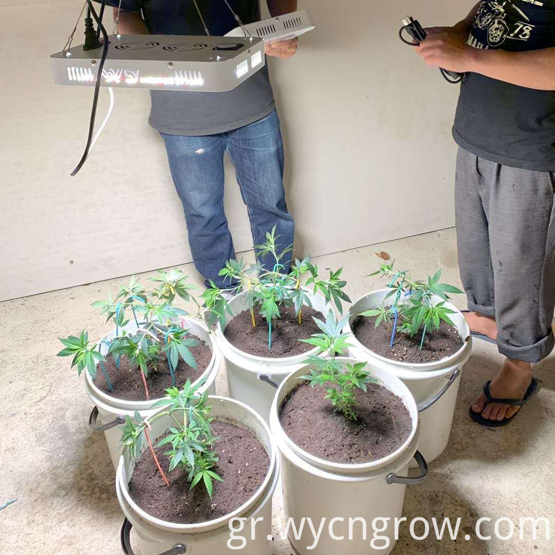 grow light 1000 watt