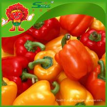 Cor pimentas preço de mercado pimenta doce redondo pimenta fresca pimentas jalapeño fresco