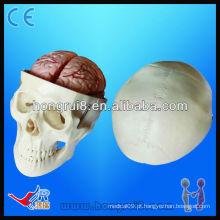 Modelo de educação de crânio de alta qualidade, modelo de crânio com cérebro de 8 partes, modelo de crânio de pvc