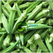 Fresh Okra de alta calidad con precios competitivos