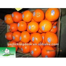 Hot venda Chinês Navel Orange Newhall