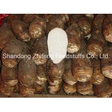 China New Crop Frisches Taro Gemüse mit bester Qualität
