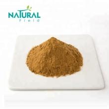 Ganoderma lucidum Extrakt Reishi Pilzpulver