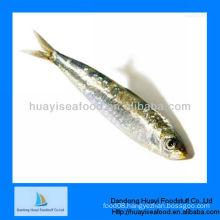 Fresh frozen sardine fish sardine seafood
