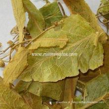 Folha de tília seca