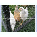 Hot DIP Galvanized Hexagonal Chicken Wire Netting