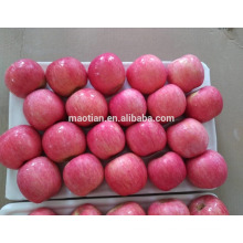 Apple Fuji