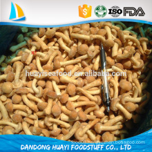frozen nameko mushrooms healthy and high quality