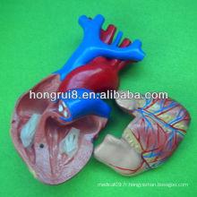 Modèle de coeur humain de la taille de l'ISO, modèle de coeur éducatif, modèle de coeur anatomique