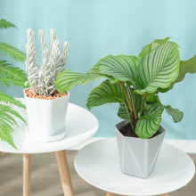 Wholesale cheap small plant pots plastic planters with saucers , indoor flower plant pots for all house plants flowers