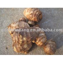 2011 top chinese fresh big taro root