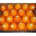 2021 Citrus Ready Export Premium New Crop Navel Orange
