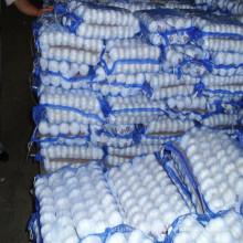 Ail blanc frais et frais pour le marché saoudien