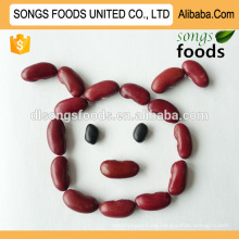 Wholesale small red beans, new crop