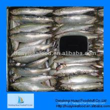Nouveau prix de la sardine de meilleure qualité