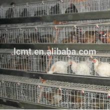 Cage de poulailler conception de haute qualité cage de poulet