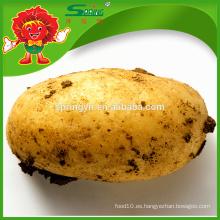 Precio chino de la patata fresca por tonelada