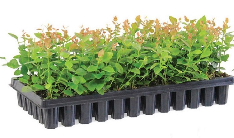 seedling tray (10)