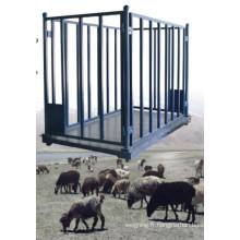 Échelle d'animaux pour moutons, bovins, porcs