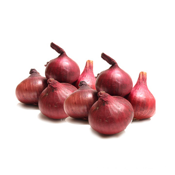 Best selling products new zealand onions